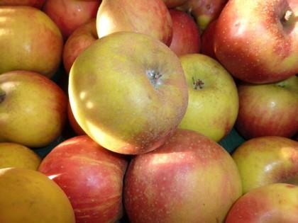 Ябълка сорт Боскопска